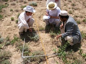 agronomie bamyan Afghanistan