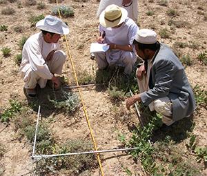 Afghanistan Agriculture Yakawlang