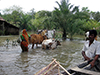 flooding-in-bangladesh-a-joint-needs-assessment