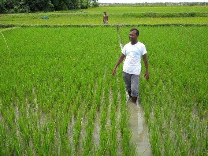 Bangladesh Riz