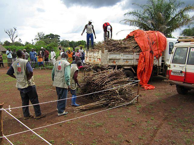 chargement boutures manioc