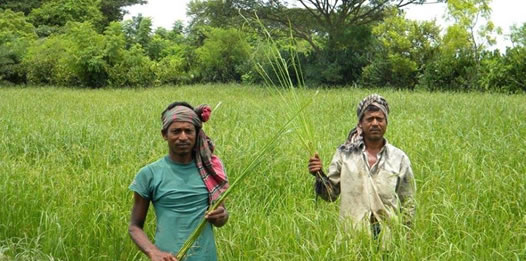 bangladesh-help-farmers-cope-with-natural-disaster
