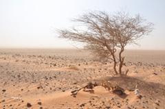 paysage aride kenya