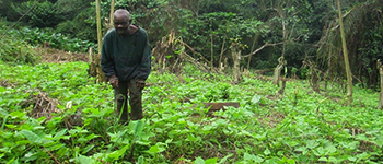 Affectés par les conflits, les pygmées sont forcés de se sédentariser en RDC