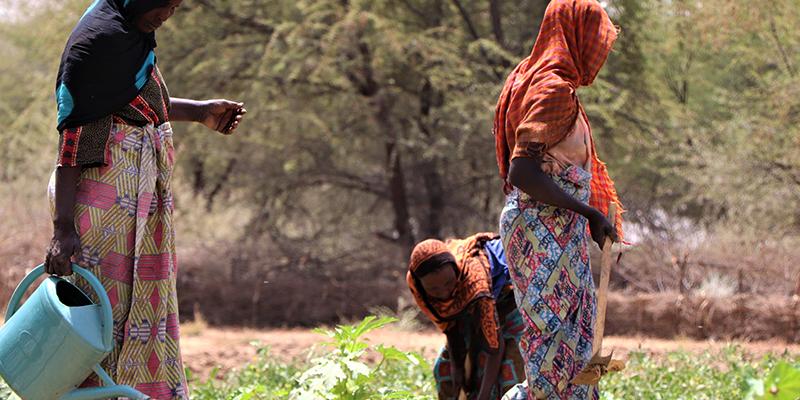 Insécurité alimentaire et Covid-19 en Afrique de l'Ouest