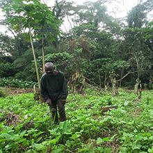 relance-agricole pour réinstaurer l-économie